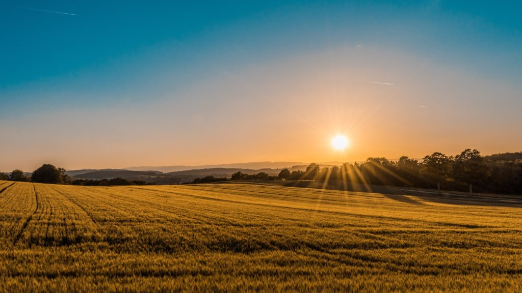 Sunset over a crop field/ CC0 Federico Respini