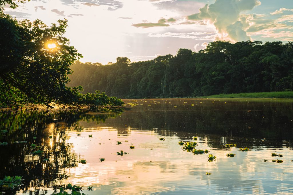 Amazon rainforest/ CC0 Andres Medina