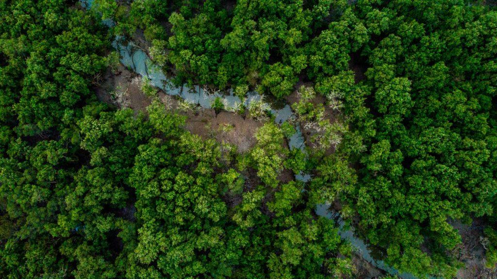 Amazon forest / CC0 eduardo-zmievski