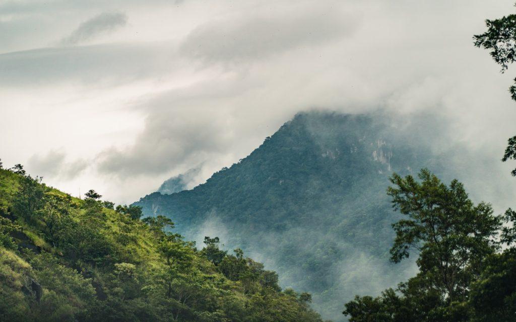 Amazon forest Brazil / CC0 patrik-carlberg