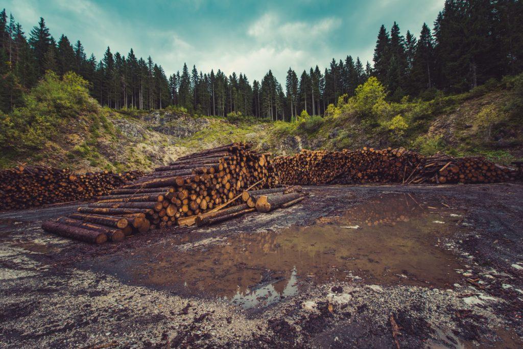 logging / CC0 ales-krivec