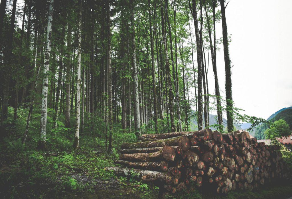 logging / CC0 jace-afsoon