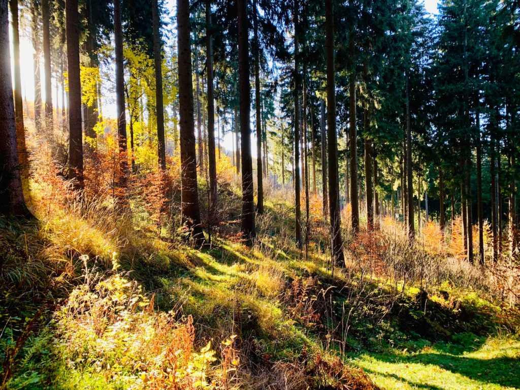 Forest/ CC0 timotheus-frobel