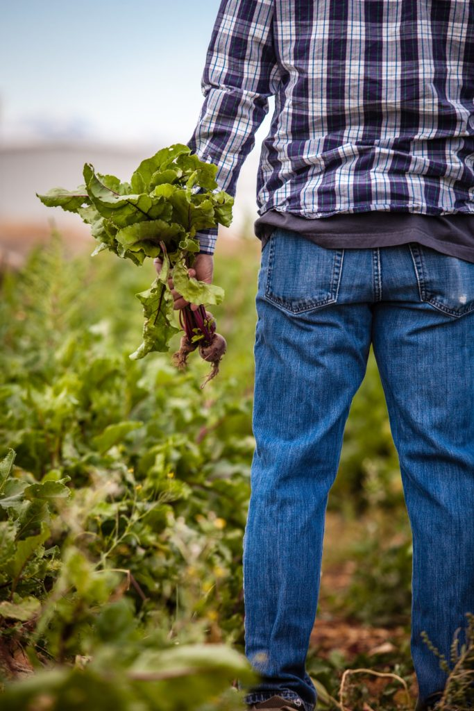Man holding beetroots/ CC0 heather-gill